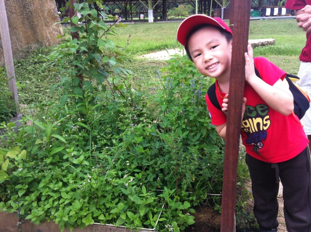 A little boy at the square foot garden